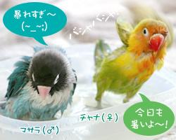 20060626_03.jpg