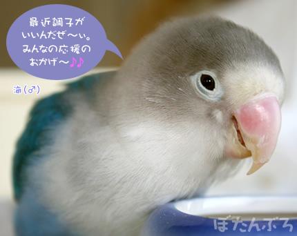 20090127_01.jpg