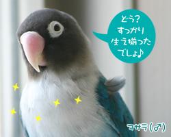 20060626_05.jpg