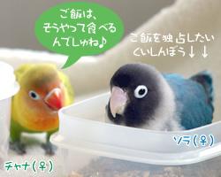 20060626_06.jpg
