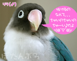 20060623_01.jpg