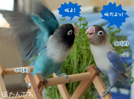 20111226_01.jpg
