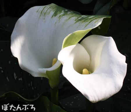 20110614_10.jpg