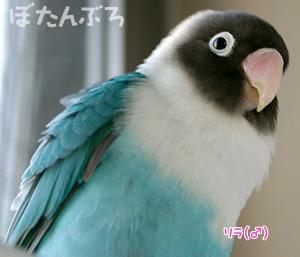 20061220_02.jpg