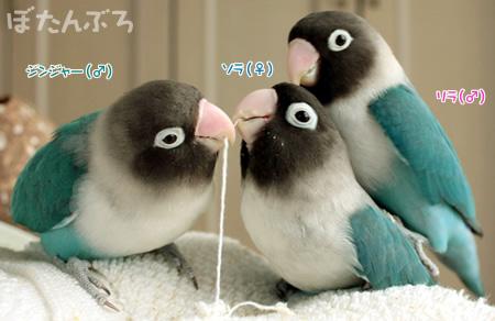 20090211_01.jpg