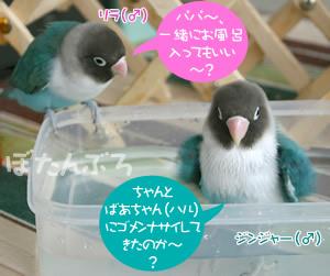 20060613_04.jpg
