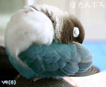 20061214_01.jpg