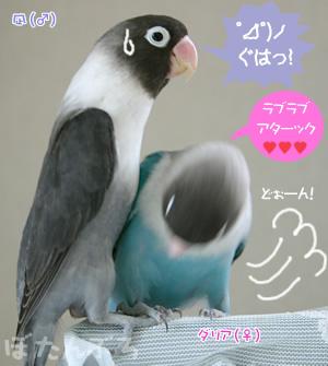20060630_03.jpg