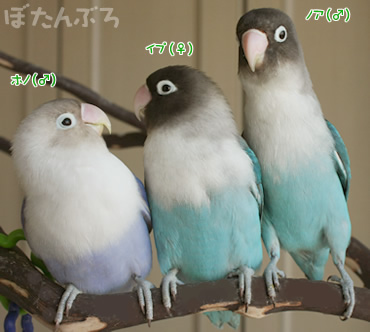 20080119_01.jpg