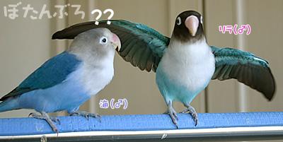 20061204_03.jpg