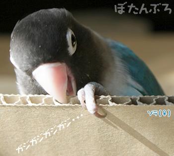 20080201_01.jpg