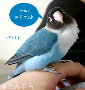 20060829_03.jpg