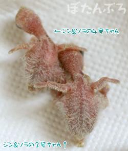 20070426_03.jpg