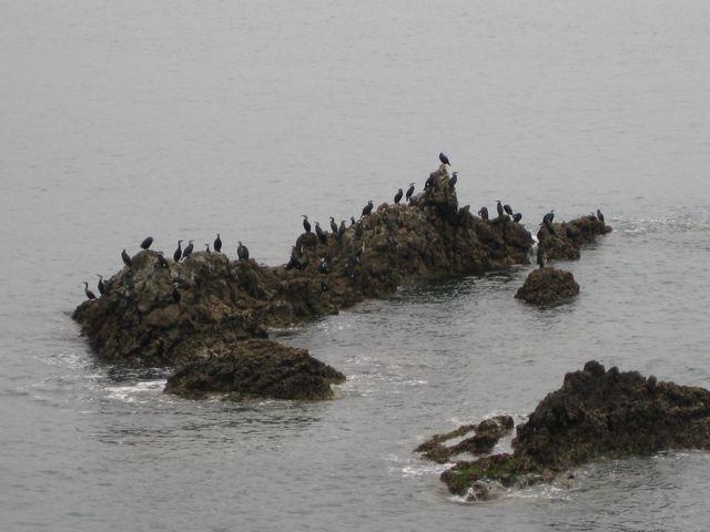 09040506岩の海鳥.jpg