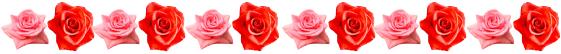 真っ赤バラ