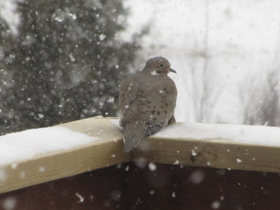 doveonthedeck