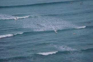 waikiki-surf.jpg