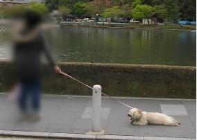 ぺたんこ犬