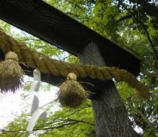 野宮神社の黒木鳥居