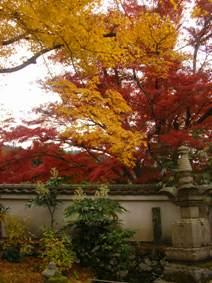 実光院の紅葉