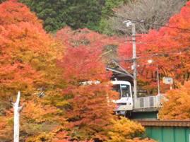 紅葉と叡電