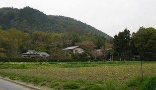 嵯峨野の長閑な風景