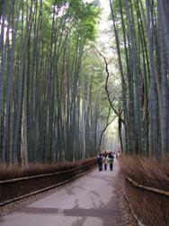 竹やぶの道