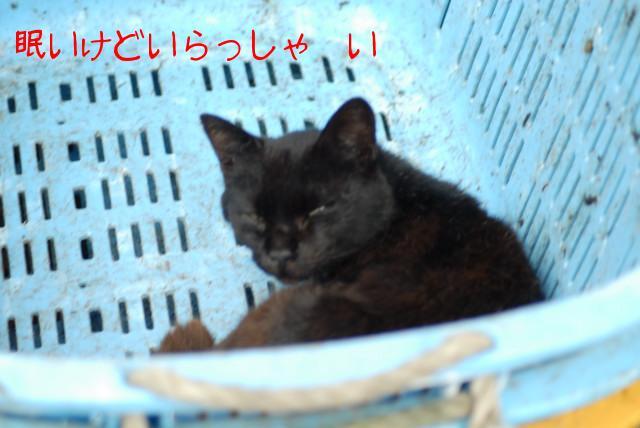 ブログD200 010.jpg