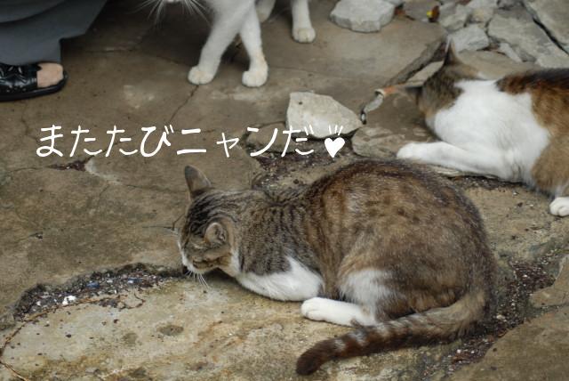 田代島ブログ用D200撮影 034.jpg