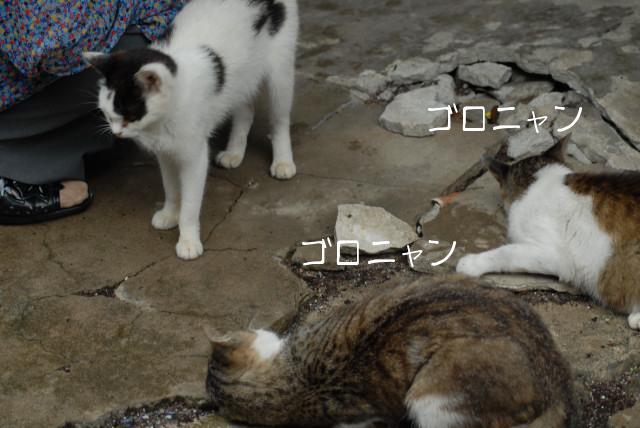 田代島ブログ用D200撮影 037.jpg