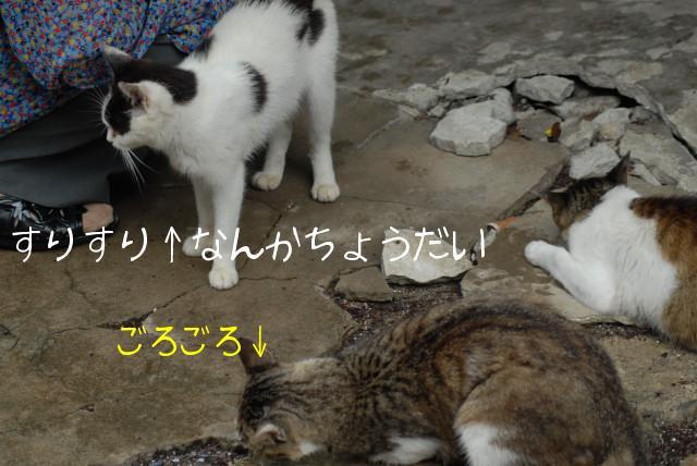 田代島ブログ用D200撮影 038.jpg