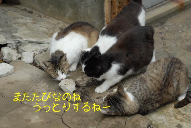 田代島ブログ用D200撮影 047.jpg