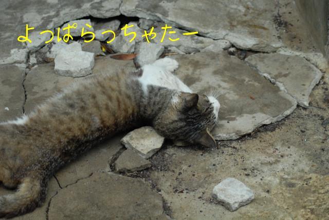 田代島ブログ用D200撮影 052.jpg