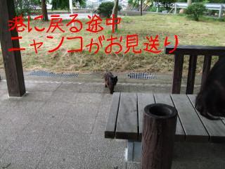 田代島 猫ロッジ 059.jpg