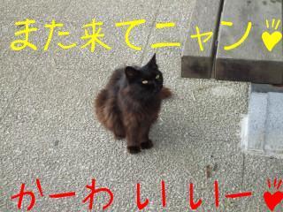 田代島 猫ロッジ 060.jpg