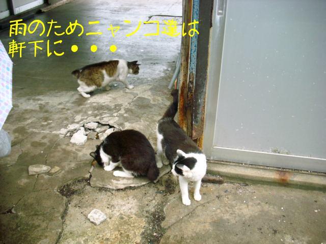 ブログ用写真 075.jpg