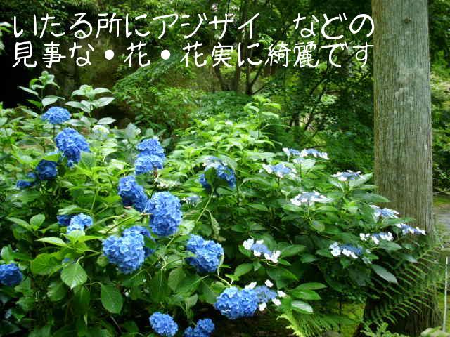 ブログ用写真 060.jpg