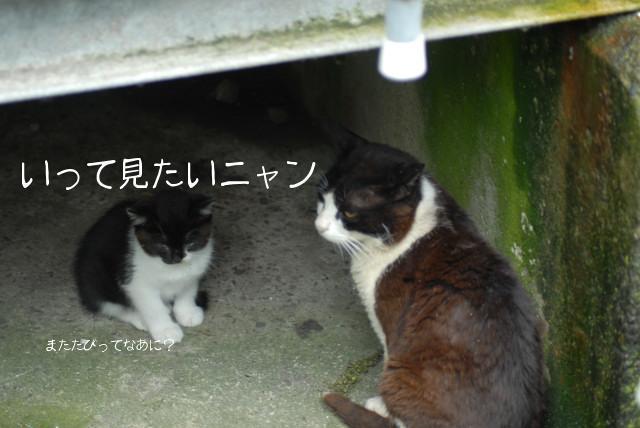 田代島ブログ用D200撮影 051.jpg