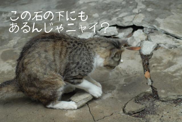 田代島ブログ用D200撮影 058.jpg