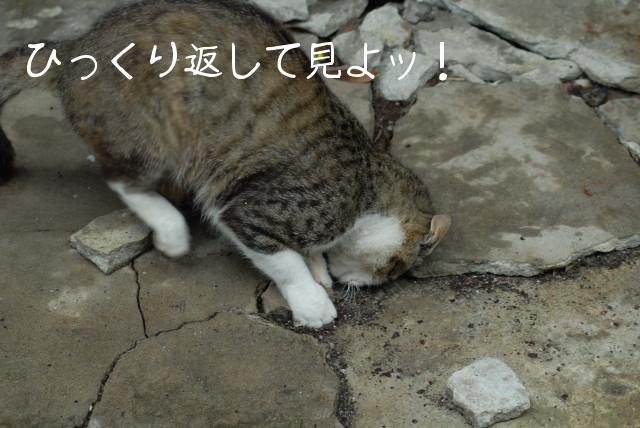 田代島ブログ用D200撮影 059.jpg
