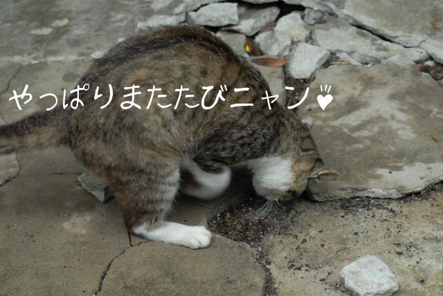 田代島ブログ用D200撮影 060.jpg