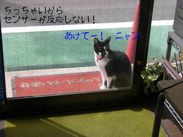 ブログ用写真 004.jpg
