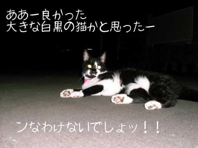 ブログ用写真 017.jpg