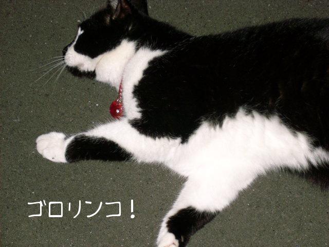 ブログ用写真 013.jpg