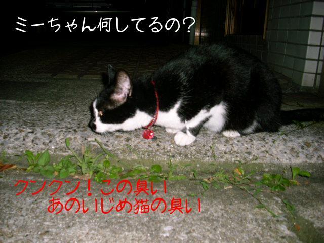 ブログ用写真 011.jpg