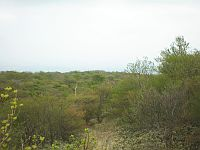 矢隠岩展望台
