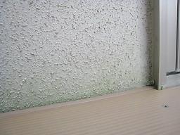 外壁のコケ0