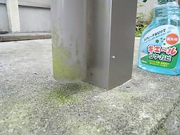 コンクリートのコケ0