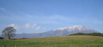 一本桜と岩手山 2010年11月13日(土)