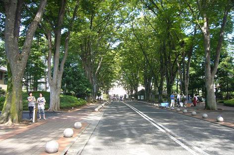 成蹊大学ケヤキ並木